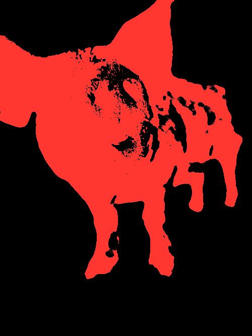 red pig image
